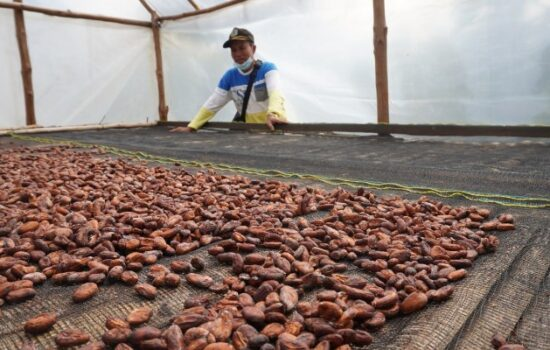 Peduli Petani Kakao, PT BAM Komitmen Bantu Petani